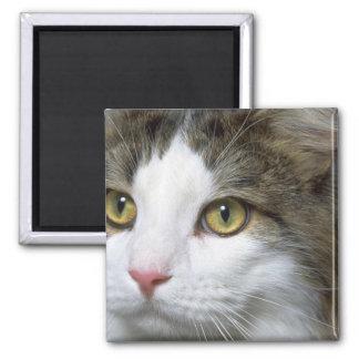 Catty Magnet