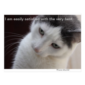 Catty Quote Postcard