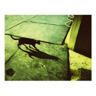 CATz Shadow Postcard