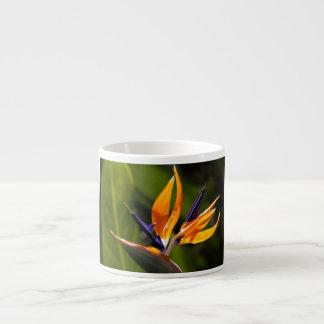caudata espresso cup