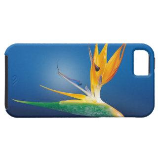 caudata iPhone SE/5/5s case