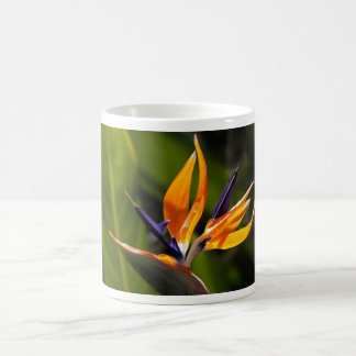 caudata magic mug