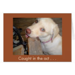 Caught in the Act of Loving You Yellow Lab Greeting Card
