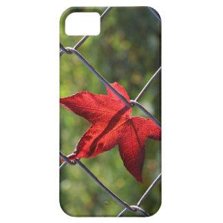 caught! iPhone SE/5/5s case