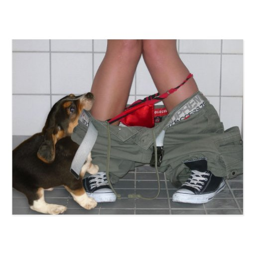 Caught with My Pants Down Again, Cute Puppy Dog Postcards