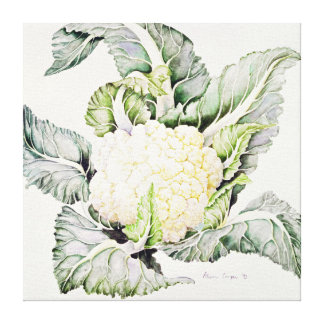 Cauliflower Study 1993 Canvas Print