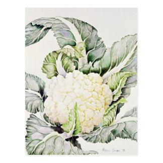 Cauliflower Study 1993 Postcard