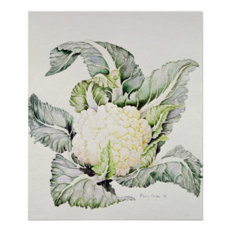 Cauliflower Study 1993 Poster