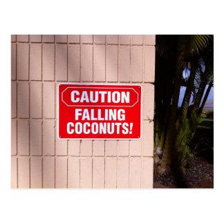Caution - Falling Coconuts! Postcard