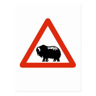Caution Musk Oxen, Traffic Sign, Greenland Postcard
