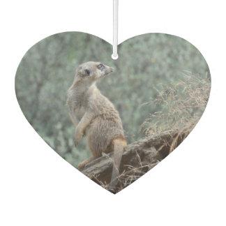 Cautious Meerkat