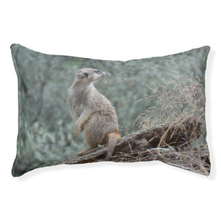 Cautious Meerkat Small Dog Bed