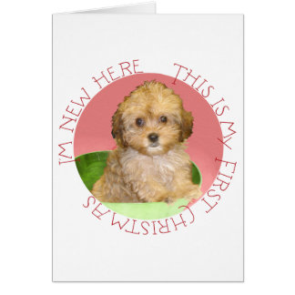 Cavachon Puppy First Christmas Cards