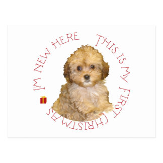 Cavachon Puppy First Christmas Post Cards