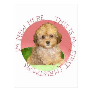 Cavachon Puppy First Christmas Postcards