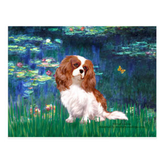 Cavalier 2 (Bl) - Lilies 5 Post Card