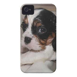 Cavalier Bath TIme iPhone 4 Cover