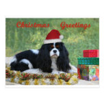 Cavalier Christmas Card Postcards