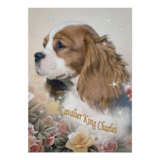Cavalier King Charles among roses Prints Poster