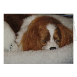 Cavalier King Charles Blenheim Blank Note Card