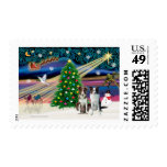 Cavalier King Charles Border Collies (two) Postage Stamp