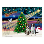 Cavalier King Charles Border Collies (two) Post Card