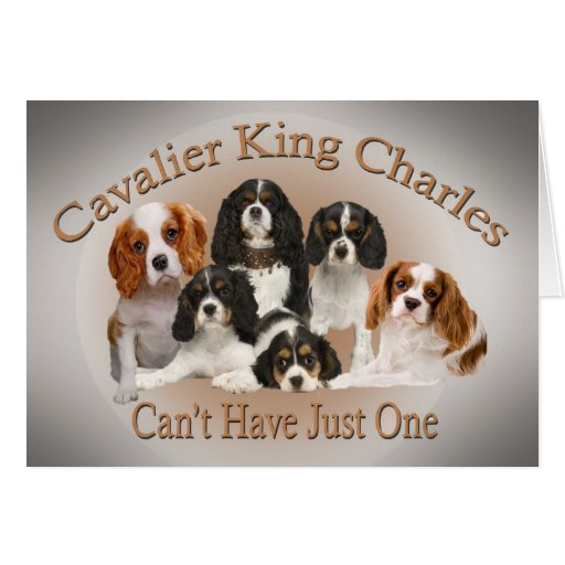 Cavalier King Charles Can't Have Just One Greeting Cards