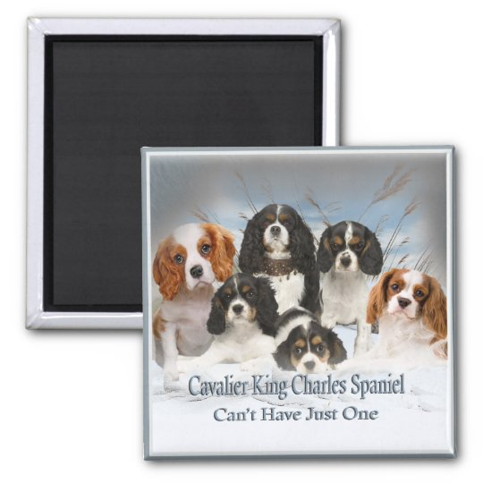 Cavalier King Charles Can't Have Just One gifts Magnet