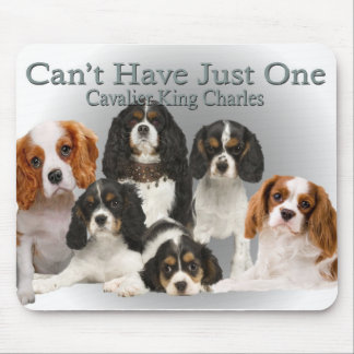 Cavalier King Charles Can't Have Just One gifts Mouse Pad