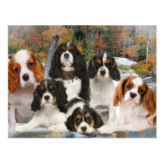 Cavalier King Charles Can't Have Just One gifts Postcard