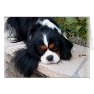 Cavalier King Charles Greeting Cards