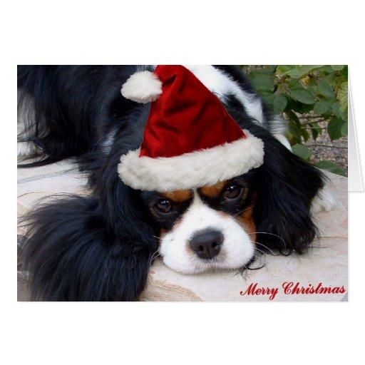 Cavalier King Charles Christmas card
