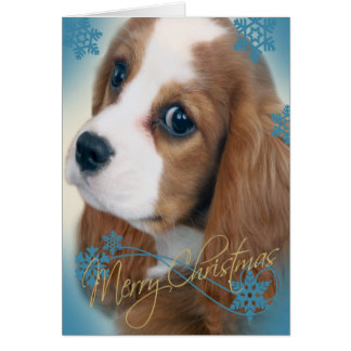 Cavalier King Charles Christmas Greeting card