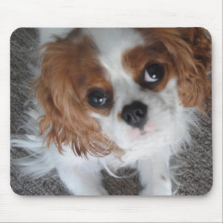 Cavalier King Charles cute puppy dog mousepad