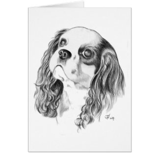 Cavalier King Charles Drawing Cards