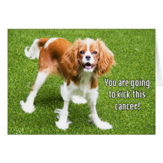 Cavalier King Charles Kick This Cancer Card
