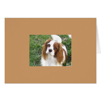 Cavalier King Charles Note Card
