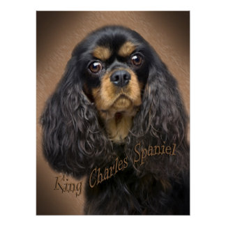 Cavalier King Charles Portrait poster