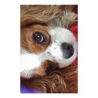 Cavalier King Charles Pretty Stationery