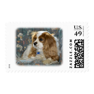 Cavalier King Charles Spaniel 8R16D-01 Postage