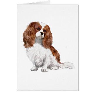 Cavalier King Charles Spaniel (A) - Blenheim 1 Greeting Cards