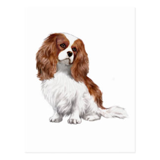 Cavalier King Charles Spaniel (A) - Blenheim 1 Postcards