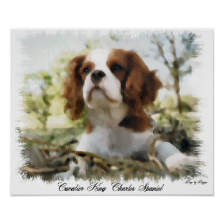Cavalier King Charles Spaniel Art Gifts Poster