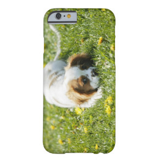 Cavalier King Charles Spaniel Barely There iPhone 6 Case
