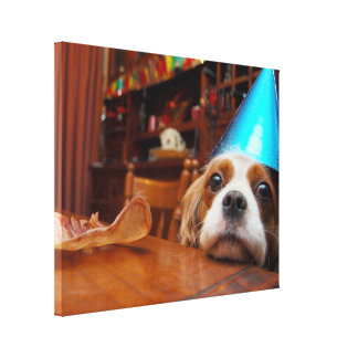 Cavalier King Charles Spaniel Birthday Canvas Print