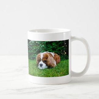 Cavalier King Charles Spaniel Blenheim in Grass Coffee Mug