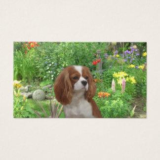 Cavalier King Charles Spaniel BreederBusiness Card