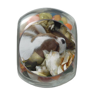 Cavalier King Charles Spaniel Glass Jars