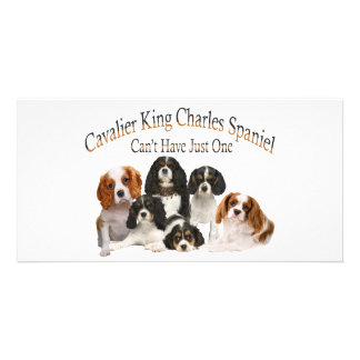 Cavalier King Charles Spaniel Can't Have Just One Card
