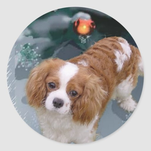 Cavalier King Charles Spaniel Christmas Gifts Stickers | Zazzle